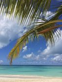 Tropical landscape — Stock Photo