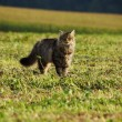 Cat in the meadow — Stock Photo