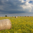 Agriculture. Mowed and rolled hay in the meadow, ready for transport to the barn — Stock Photo