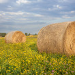 Agriculture. Mowed and rolled hay in meadow, ready for transport to barn — Stock Photo #29970671
