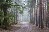 Forest& mist — Foto Stock