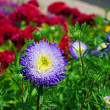 Blue flower — Stock Photo #12333069