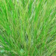 Green grass close up with dew drops — Stock Photo