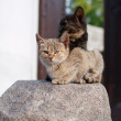Two Cats — Stock Photo #16349529
