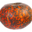 Stock Photo: Pumpkin with red and orange spots