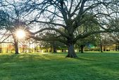 Sunny light in the park — Stock Photo