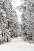 Forest Covered With Snow — Stock Photo