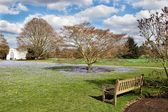 Wooden bench in a park with forget-me-no flowers — Stock Photo