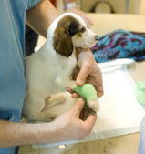 Veterinarian doctor with dog — Stockfoto