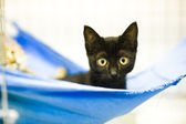 Cat in veterinary clinic — Stock Photo