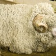 Arles Merino ram — Stock Photo #34561129