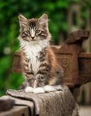 Adorable tabby kitten — Stock Photo