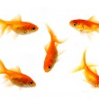 Goldfish collection — Stock Photo #27497299