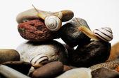 Hlemýždi na skalách — Stock fotografie