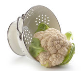 Cauliflower — Stock Photo