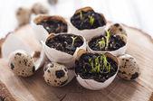Easter egg shell decoration — Stock Photo