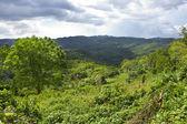 Jamaica. naturaleza tropical — Foto de Stock
