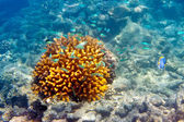 Ryby w korale. Malediwy — Zdjęcie stockowe