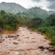 Stock Photo: Jamaica. The river after a rain