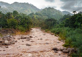 Jamaica. The river after a rain — Stock Photo