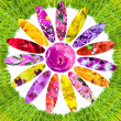 Green grass and collage of flowers — Stock Photo
