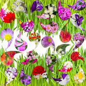 Abstract background - green grass and collage of flowers — Stock Photo
