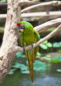 Bright large tropical parrot sit on a branch — Stok fotoğraf