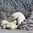 The white she-bear feeds newborn bear cubs with milk — Stock fotografie