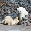 The white she-bear feeds newborn bear cubs with milk — Stockfoto
