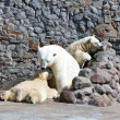White polar she-bear with bear cubs — Stockfoto