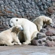 White polar she-bear with bear cubs — Foto Stock
