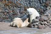 The white she-bear feeds newborn bear cubs with milk — Stock Photo