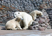 White polar she-bear with bear cubs — Stock Photo