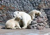 White polar she-bear with bear cubs — Stock Photo