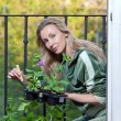 Stock Photo: Young womlands seedling on balcony