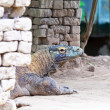 Huge monitor lizard — Stock Photo #21452621