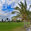 Palm trees on golf  field — Stock Photo