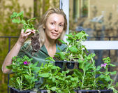 The young woman lands seedling — Stock Photo