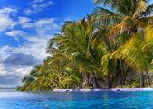 Bazén a palmy — Stock fotografie