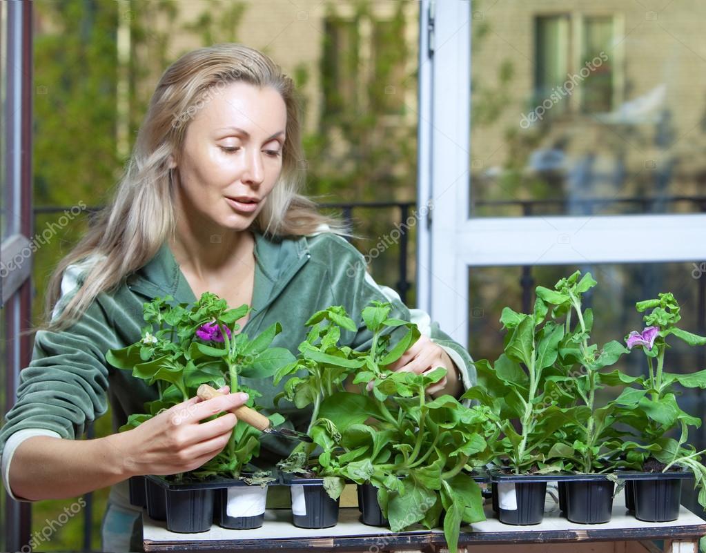la jeune femme et la bo te avec semis de fleurs petunia mise au point au premier plan. Black Bedroom Furniture Sets. Home Design Ideas