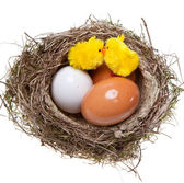 Birds nest with eggs and toy chickens inside, on white — Stockfoto