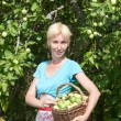 The young attractive woman with a basket of apples in a garden — Stock Photo