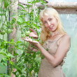 The young attractive woman in a hothouse rejoices to the future crop of tomato — Stock Photo