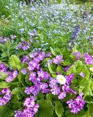 Cama com flores — Fotografia Stock