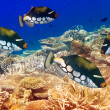 Pack of tropical fishes over a coral reef — Stock Photo