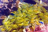 Indian ocean. Underwater world — Stock Photo