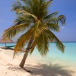Palm tree on a sandy beach at the cyan sea. Maldives. — Stock Photo