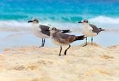 Seagull on sand — Stockfoto