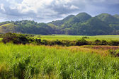 Jamaica. Tropical nature at a foot of the Nassau mountain. — Stock Photo