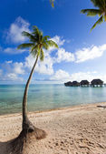 Palm tree on a sandy beach at the cyan sea — Stok fotoğraf